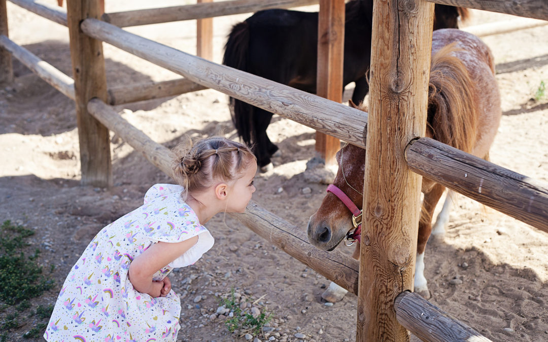 little girl looking at a pony